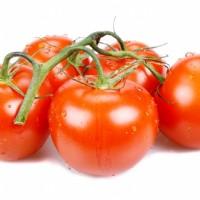 Tomaten schmecken immer